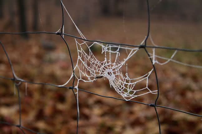 Cobweb in a fence - free stock photo