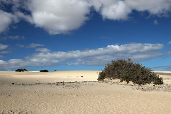 Fuerteventura dunes - free stock photo